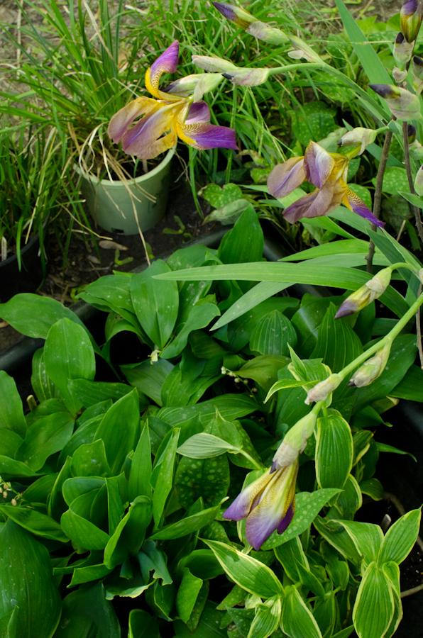 Plant Sale Plants-4