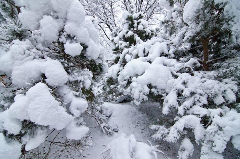 Snow Storm-1