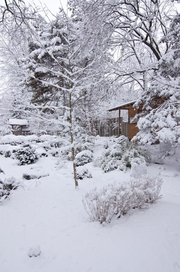 Snow Storm-5