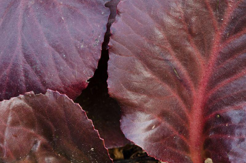 Foliage 5-12-10