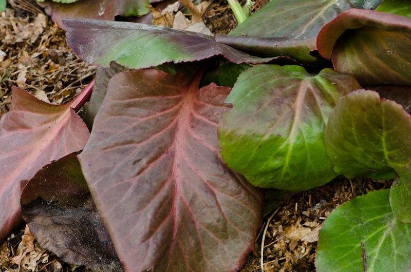 Foliage 5-12-11