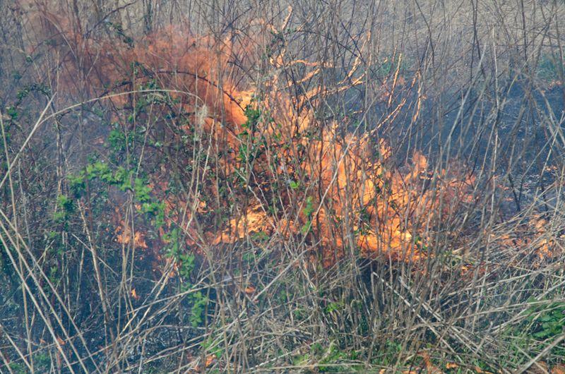 Prairie Burn-11