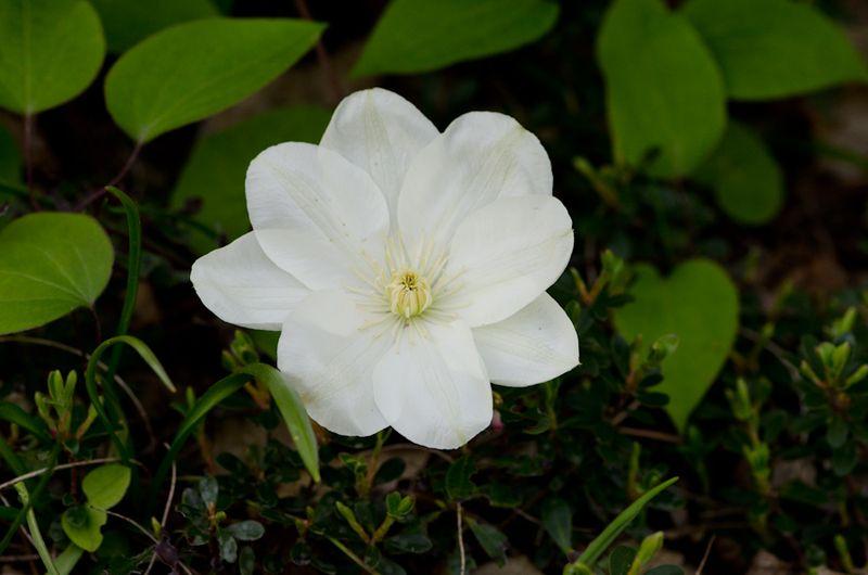White April-10