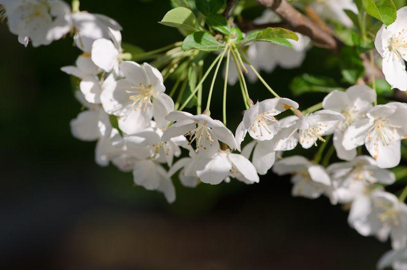 White April-16