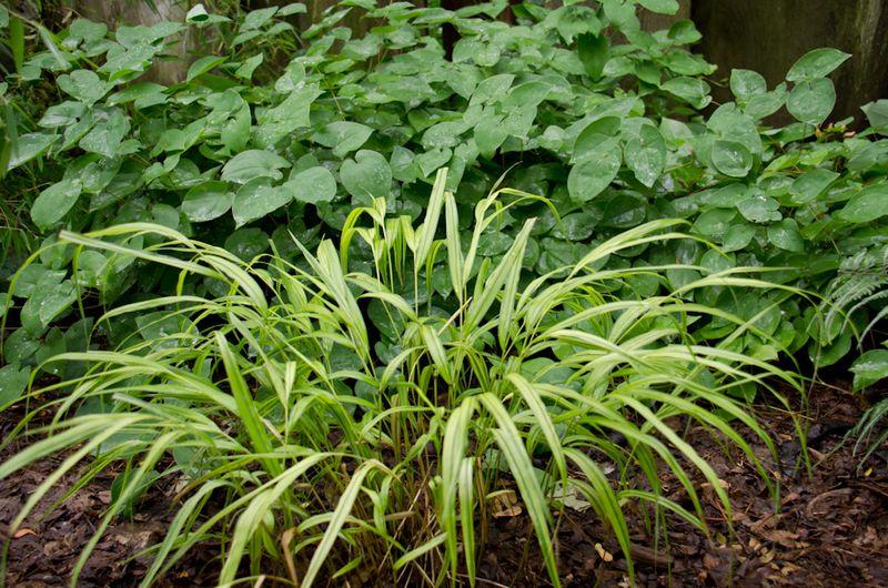 July Gardens 2012-10