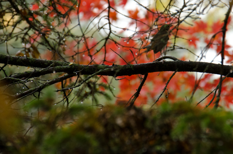 Fall Color 10-14-12-6