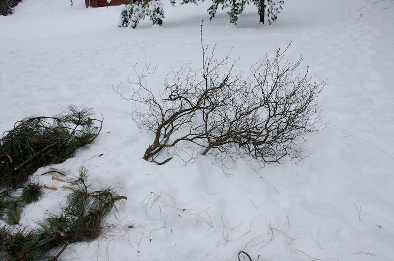 Tree Down-5