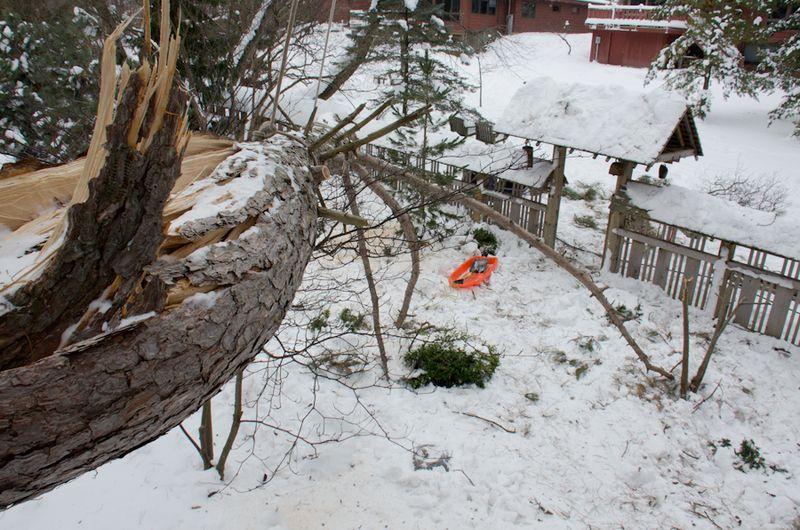 Tree Down-14
