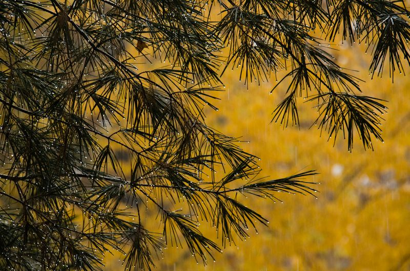 Fall Color 10-14-12-5