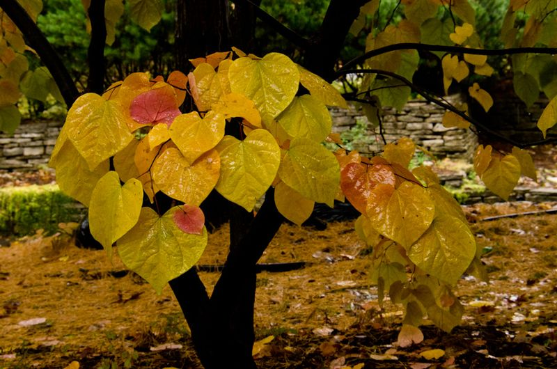 Fall Color 10-14-12-8