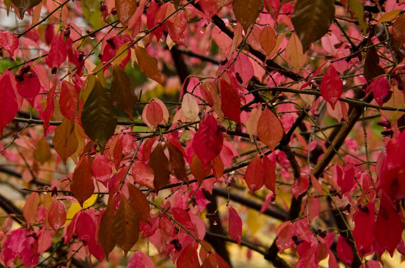 Fall Color 10-14-12-9