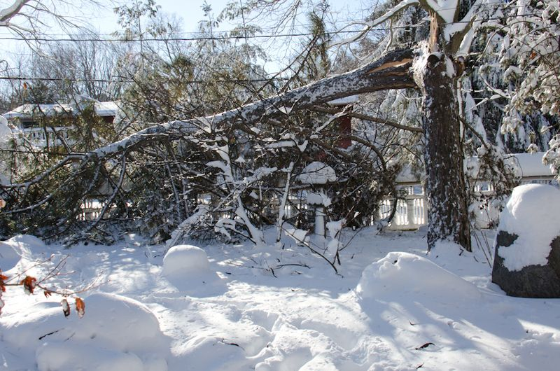 Tree Down-10