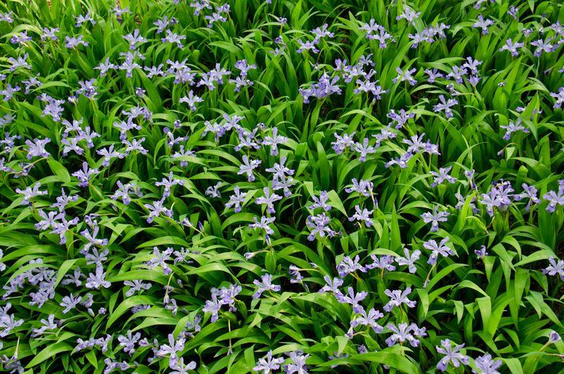 Spring blossoms-21