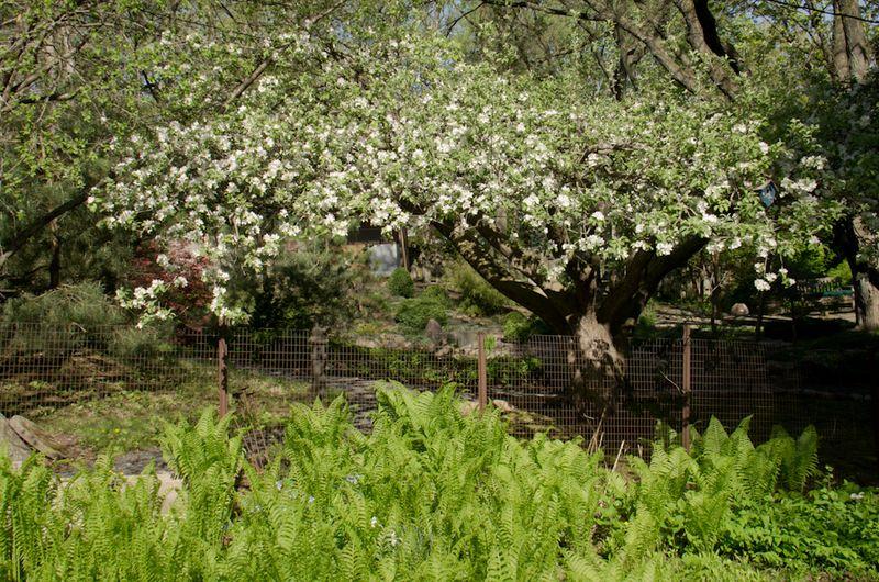 Spring blossoms-4
