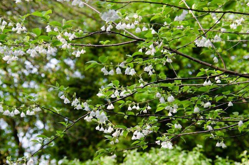 Spring blossoms-16