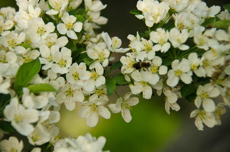 Spring blossoms-7