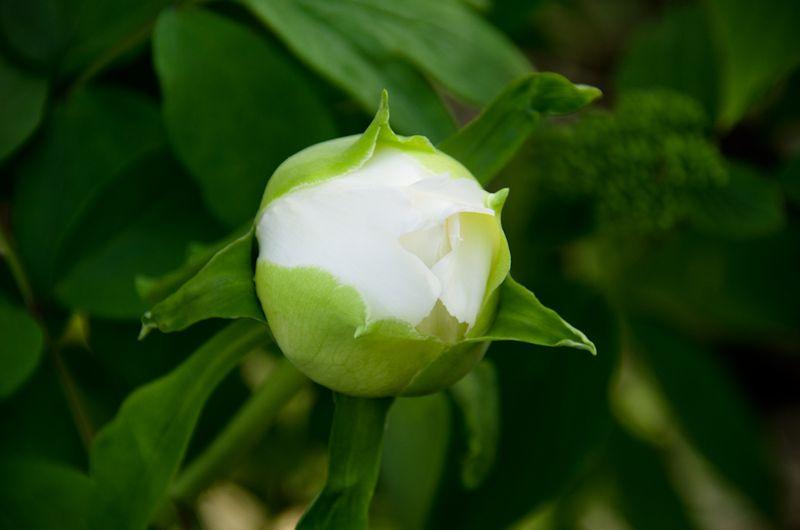 Spring blossoms-10