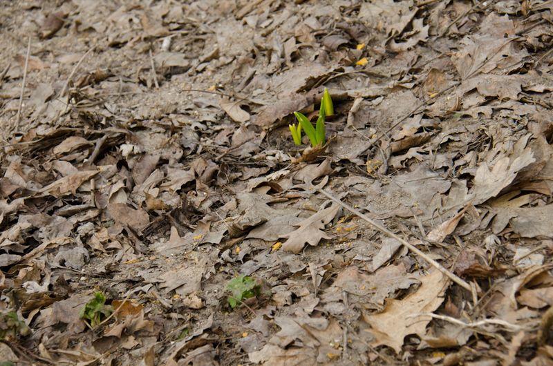 Spring blooms 14-14