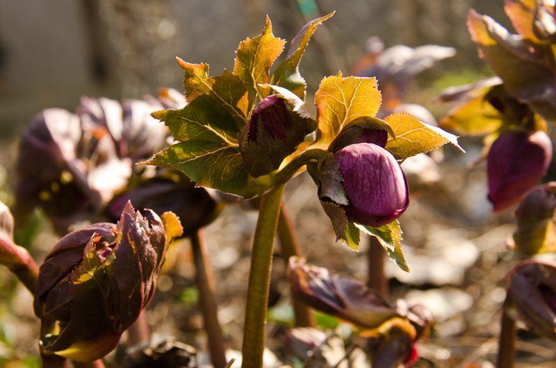 Spring blooms 14-3
