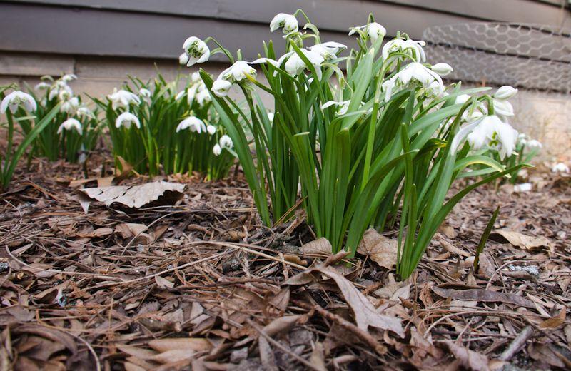 Spring blooms 14-2