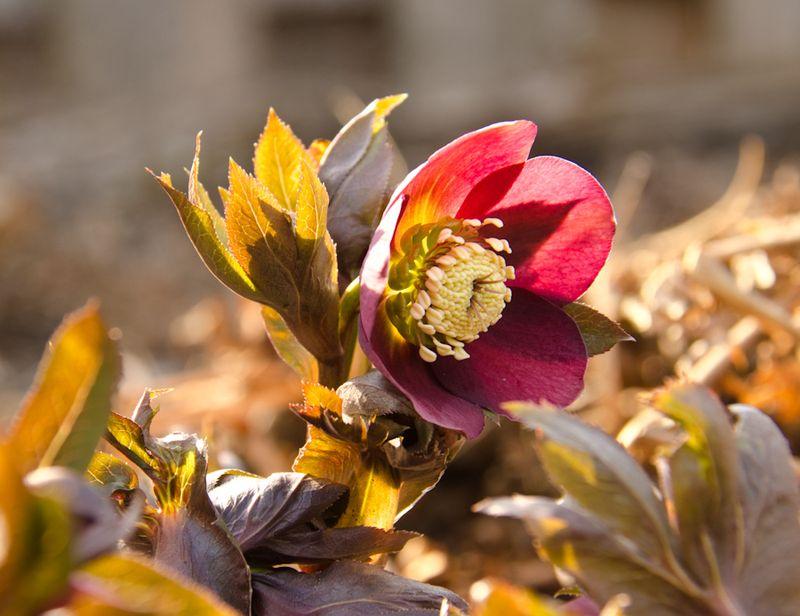 Spring blooms 14-12