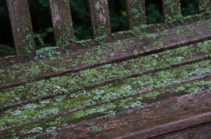Lichens after rain-8