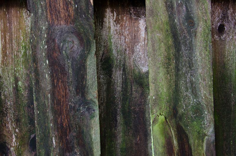 Lichens after rain-14