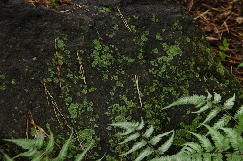 Lichens after rain-16