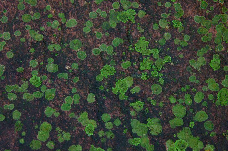 Lichens after rain-22
