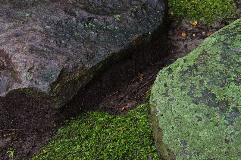 Lichens after rain-12