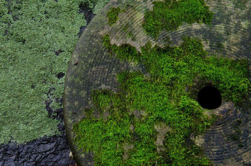 Lichens after rain-18