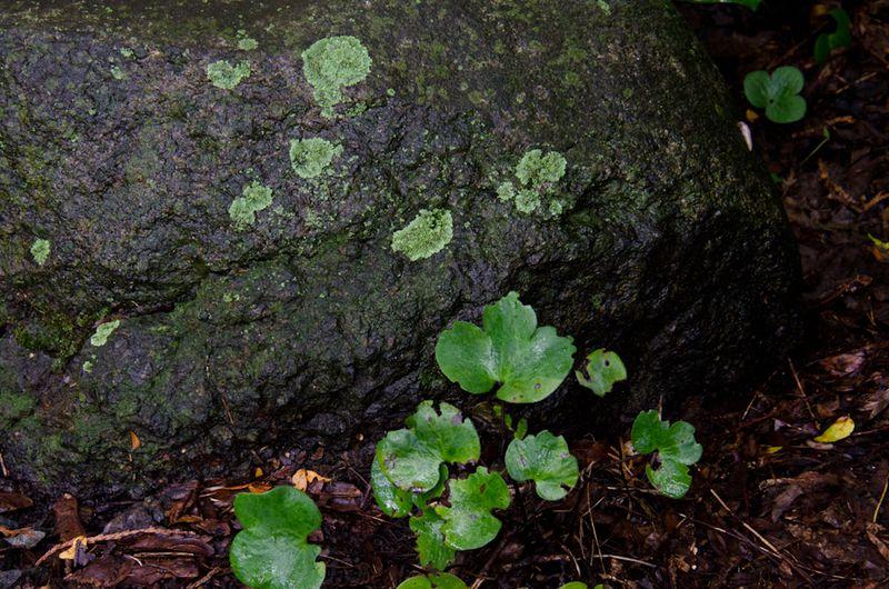 Lichens after rain-20
