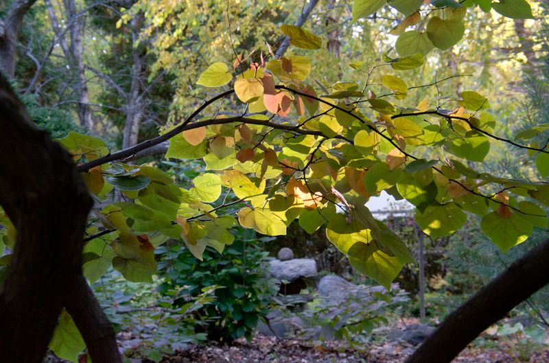 Fall Color 14-10