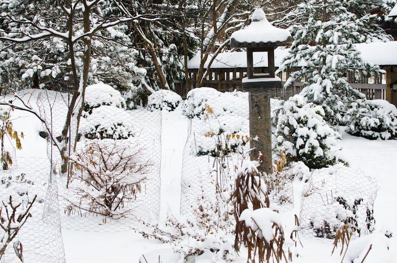 Snow 11-2104-4