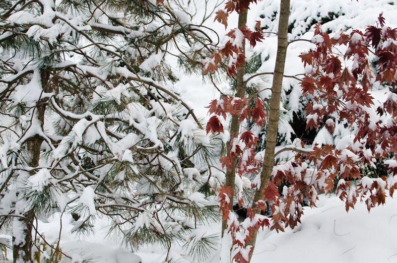 Snow 11-2104-13