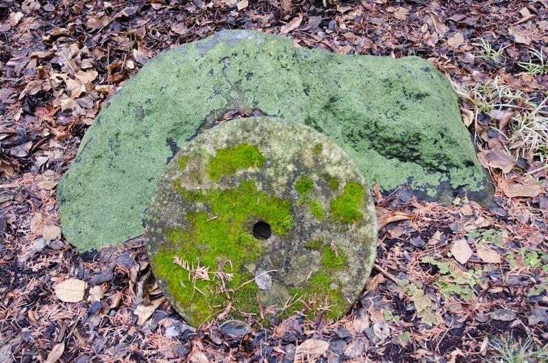 December Greens-4