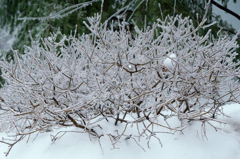 Winter Interest-16