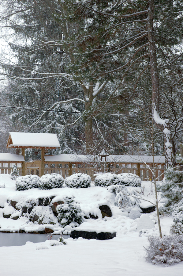 Winter Interest-17