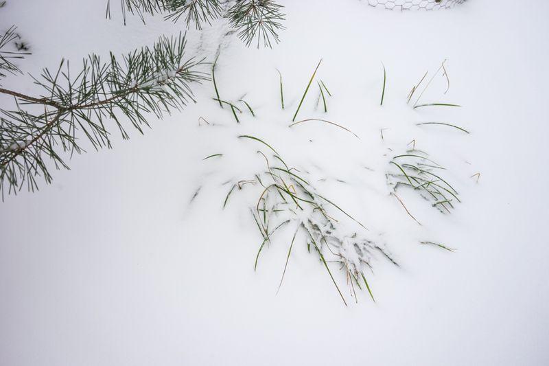 Dec Snow-15