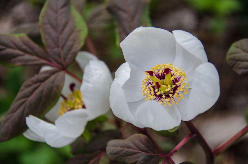Flowers Spring 16-6