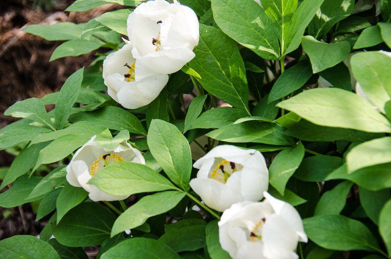 Flowers Spring 16-9