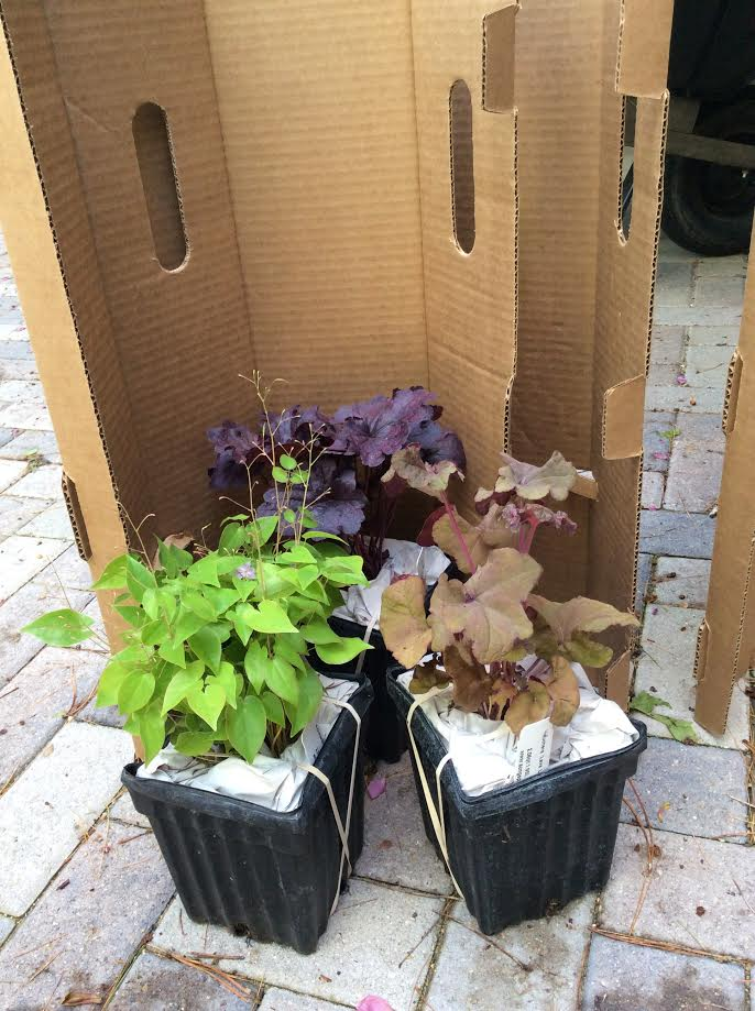 Each Little World Mail Order Plants Klehm S Song Sparrow Farm
