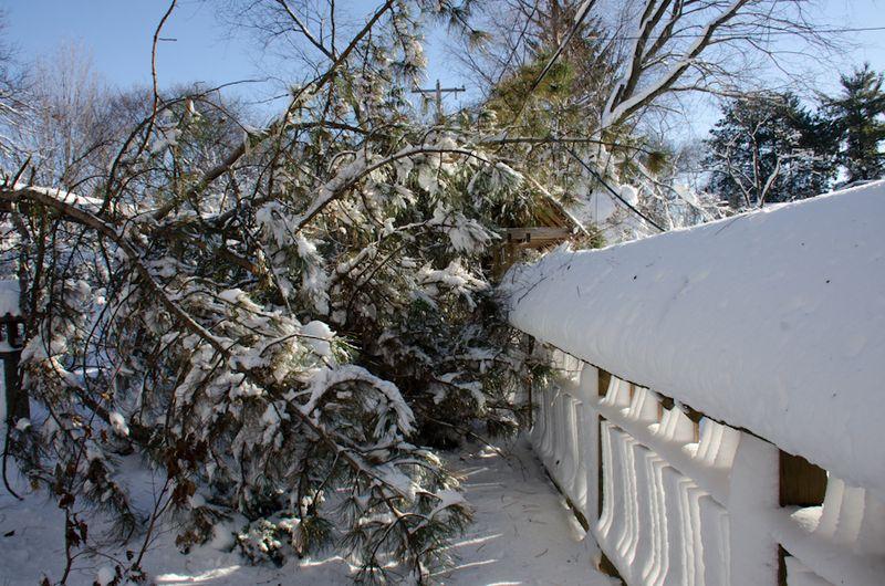 Tree Down-8