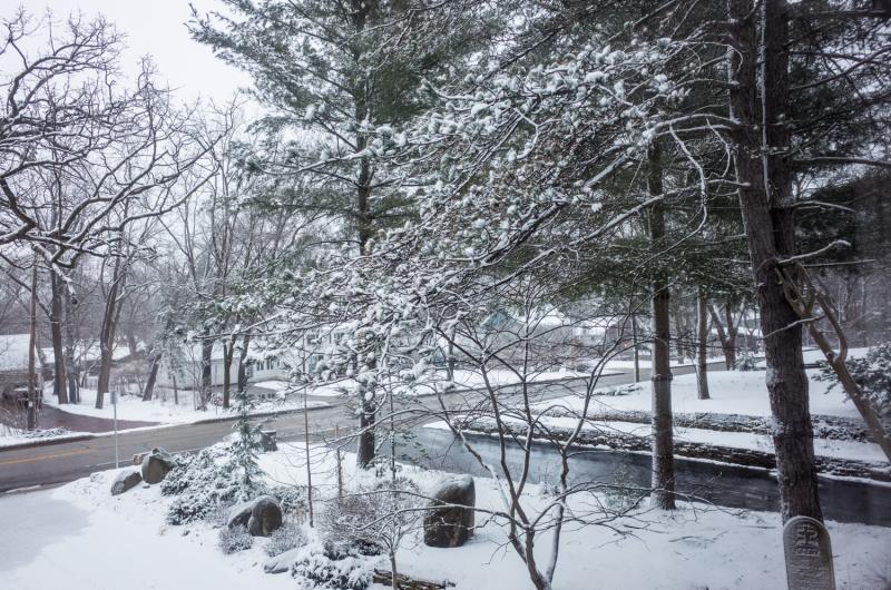 Spring Snow Yard-6