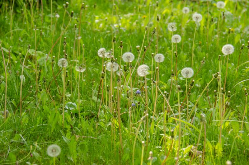 Spring Whites-5