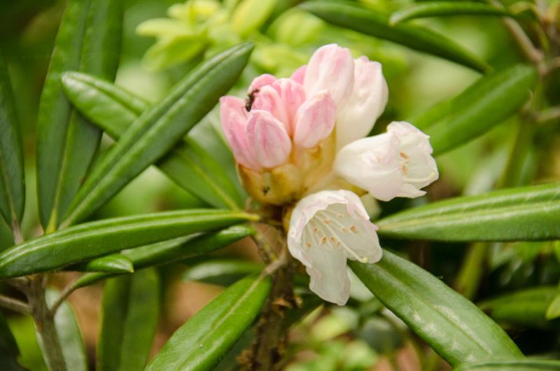 Spring Whites-14