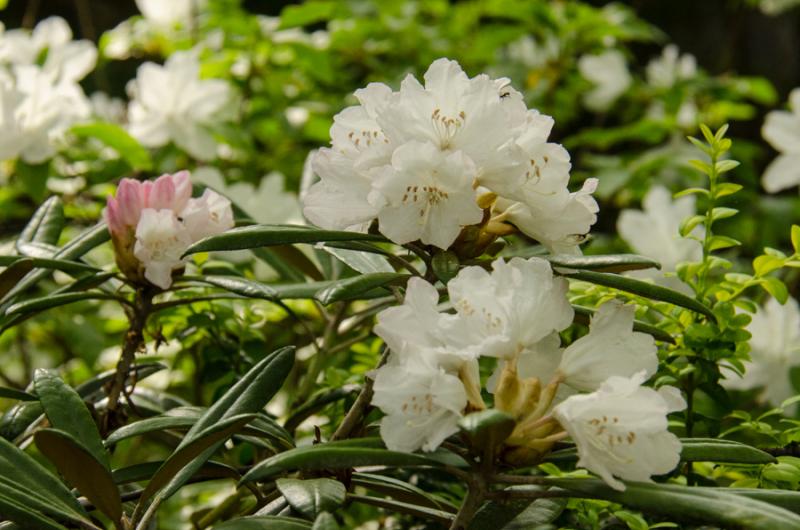 Spring Whites-12