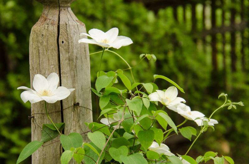 Spring Whites-32