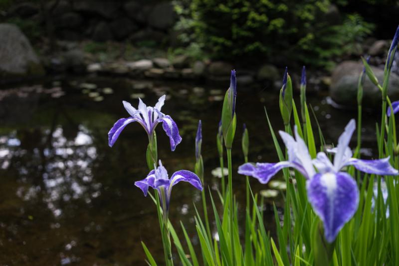 Iris 2017-10
