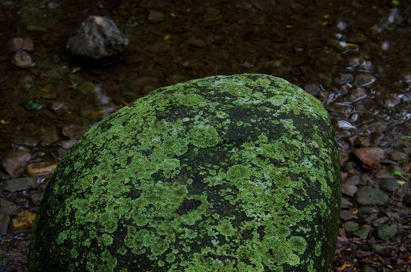 Lichens after rain-21